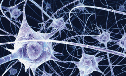 Making A Better Brain: Scientists Just Discovered a New Kind of Brain Cell